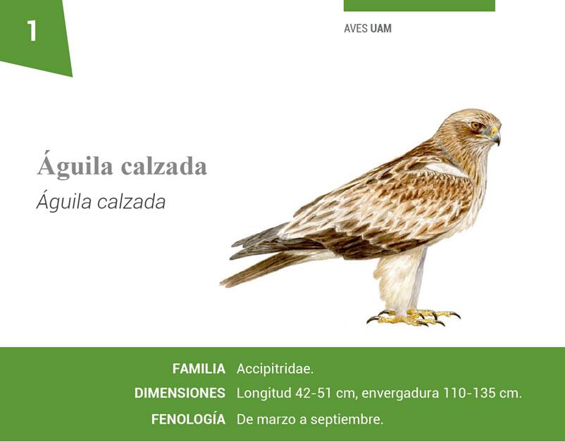 Fichas de las Aves Universidad Autónoma de Madrid BioatlasApp Grupo Heliconia