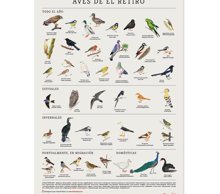 Poster Aves del Parque del Parque del Retiro