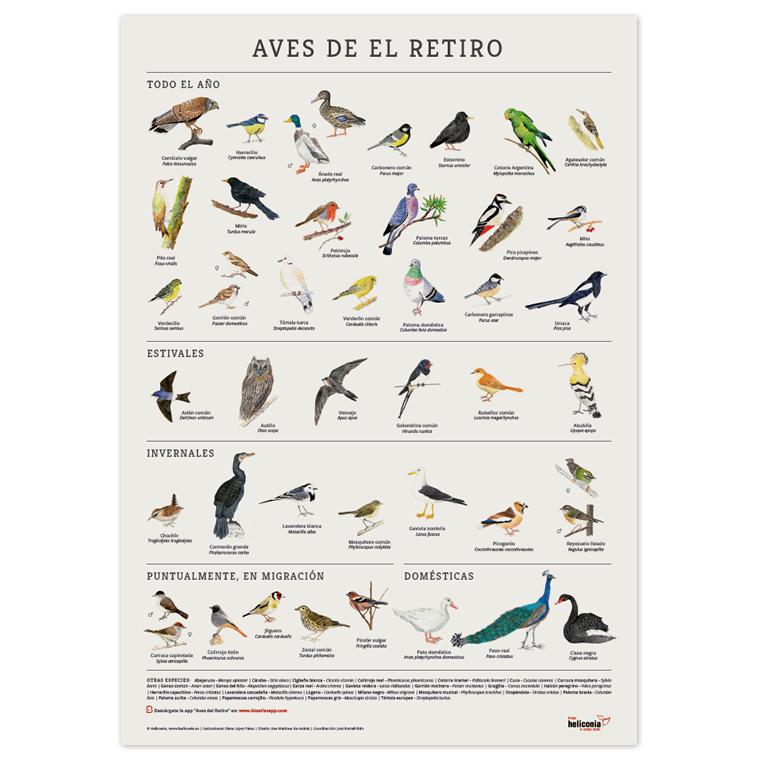 Poster de las Aves del Parque del Retiro Madrid. BioatlasApp Grupo Heliconia