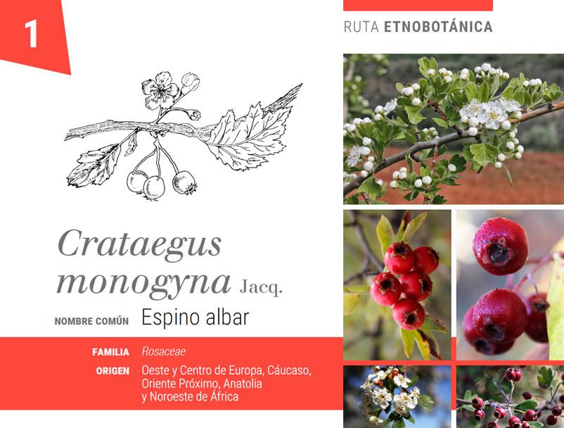 Ficha botanica Universidad Autonoma de Madrid BioatlasApp Grupo Heliconia