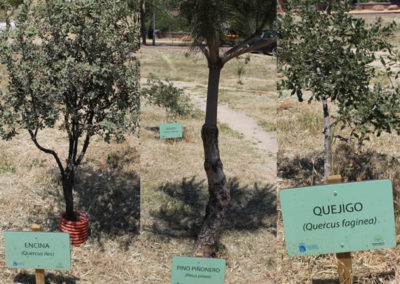 Panel Señalizacion Especie Botánica Parque Agrario Fuenlabrada BioatlasApp