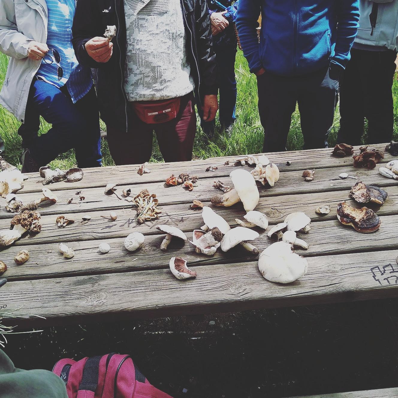 Cursos, jornadas y charlas de ornitología, micología, fauna urbana, jardinería y horticultura.