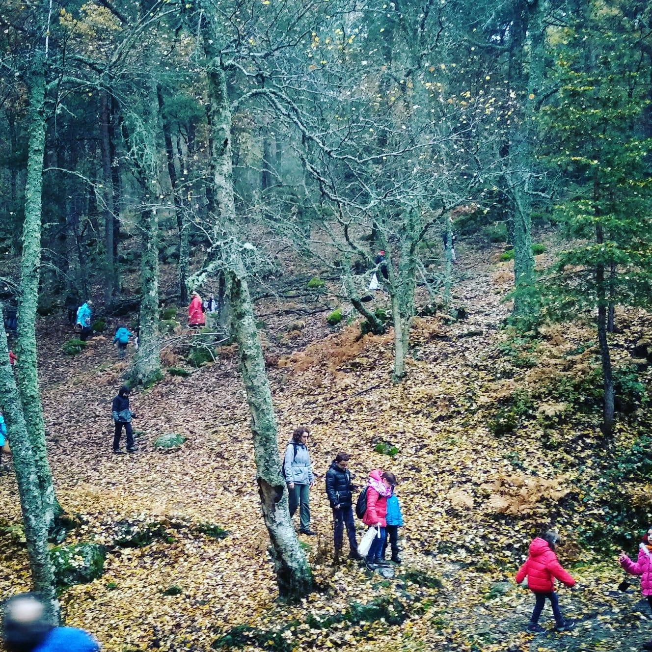 Excursiones para plantar árboles y limpiar los bosques